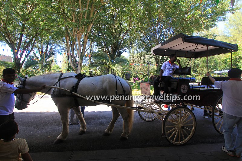Horse carriage riding, Penang Turf Club