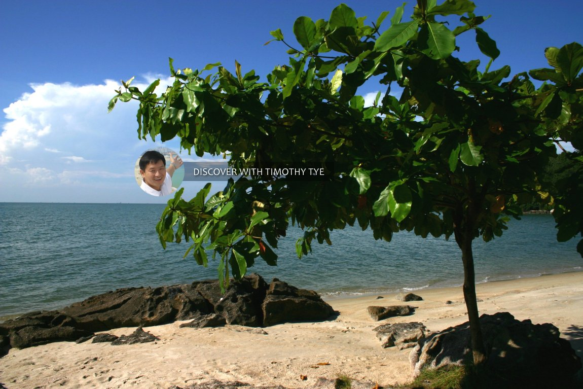 Ketapang tree by the seashore at Gertak Sanggul