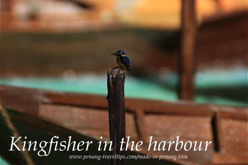 Kingfisher in the harbour