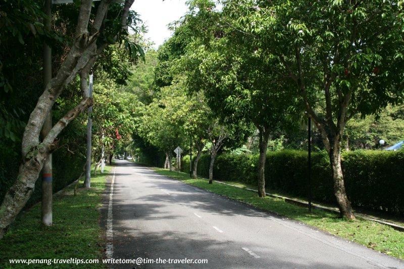 Rose Avenue, Ayer Rajah