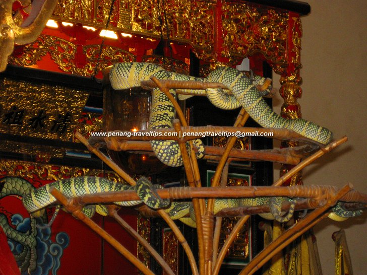 Snake Temple Pit Vipers